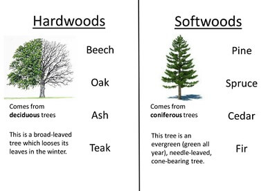 softwood-and-hardwood-characteristics